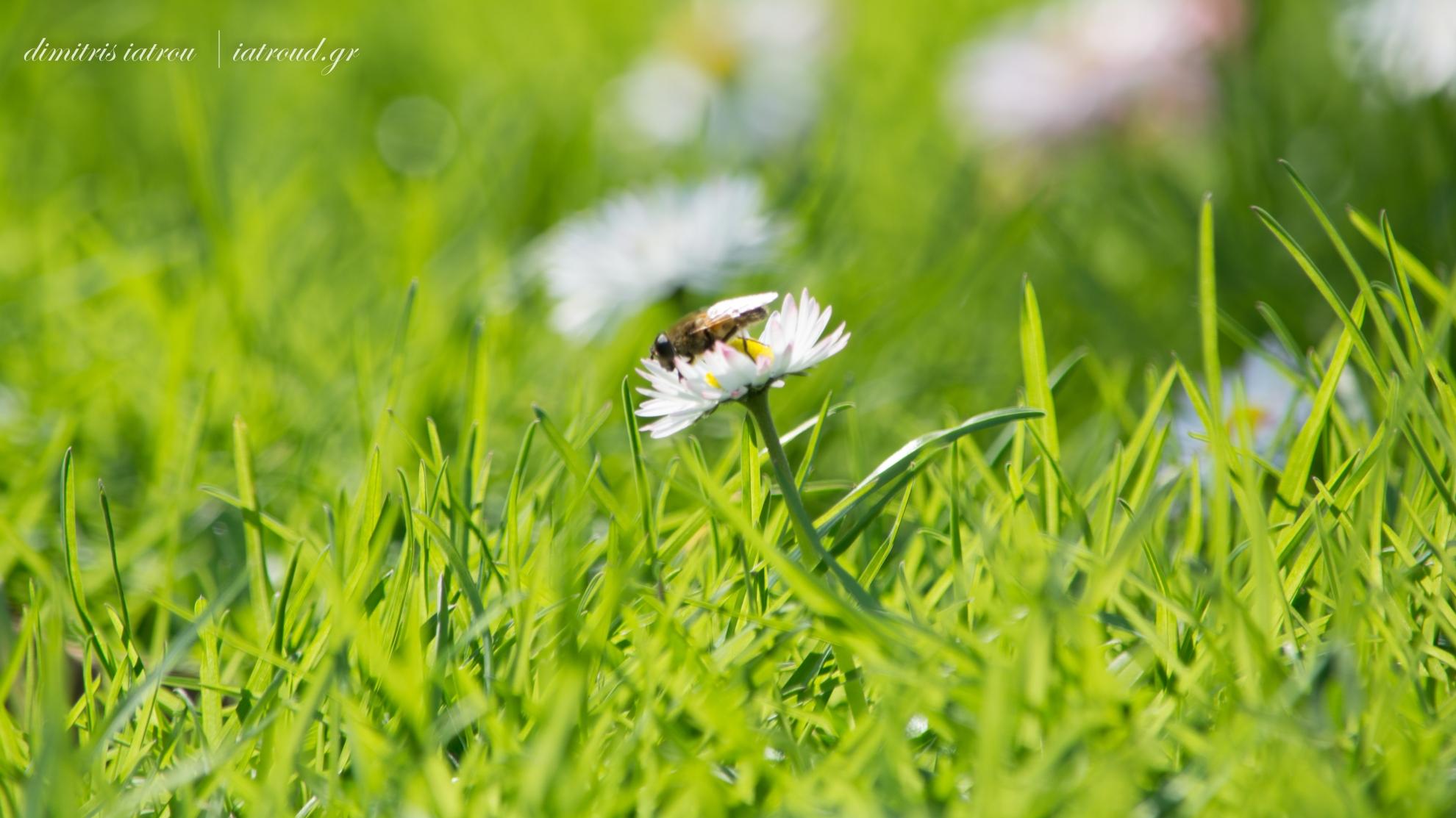 bee grass green orgasm