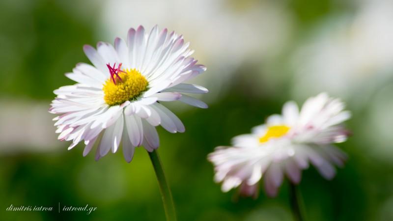 bloomy couple